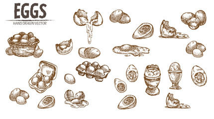 Digital vector detailed line art eggs in wooden
