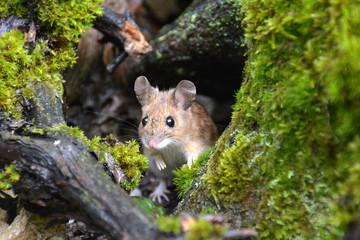 Bilder Und Videos Suchen Süsse Maus