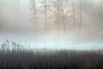 Pastelowa Jesień i Mgła