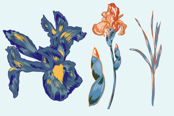 Blue Iris Vector Element Pack