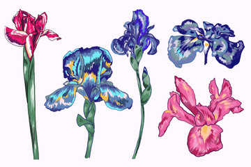 Botanical Blue Iris Vector Elements Pack
