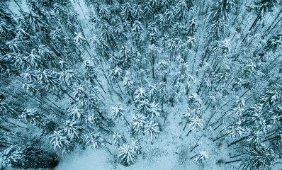 Aerial view of winter snow covered forest landscape. Drone photography collection.