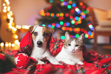 Wall Murals Christmas Cat and dog under a christmas tree
