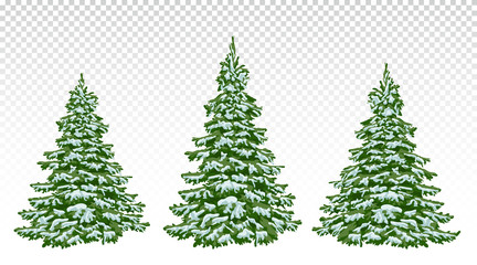 set of beautiful Christmas trees in the snow. Christmas. Winter. Nature in details. Drawing. Vector. Eps 10.
