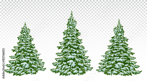 Christmas Trees Drawing.Firs In The Snow A Set Of Christmas Trees With Snow