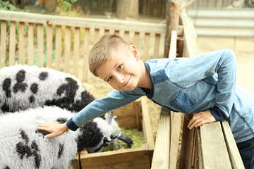 Cute little boy stroking sheep on farm
