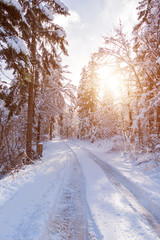 Snow covered road in the winter forest.