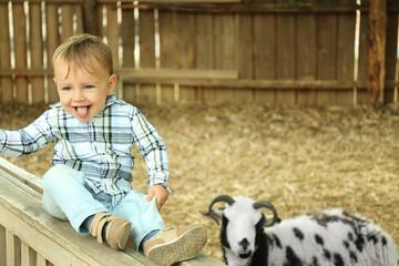 Cute little boy looking at sheep on farm