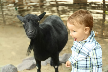Cute little boy with goat on farm