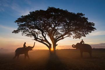 Elephants with tree scenic while sunrise.