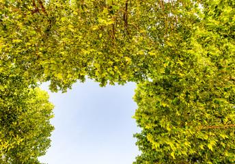 Blue sky framed by green tree leaves