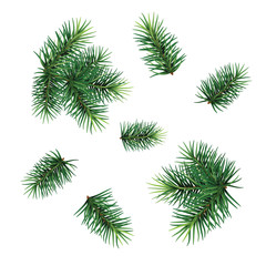 Set:  fir-tree branches for festive design. Close-up. Isolated. Christmas. New Year.   Vector Illustration .Eps 10.