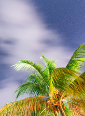Starry sky with tropical palm on foreground, Seychelles