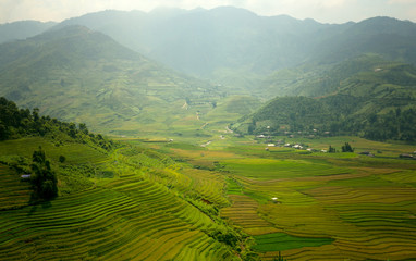Garden Poster Rice fields Vietnam Beautiful mountain landscape and rice terrace green and yellow in rice field.