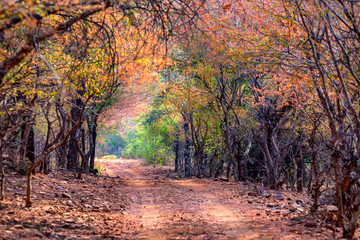 Landscape of Ranthambore, India. Road and forest