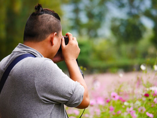asian tourist is taking a photo in cosmos flower field blur  background