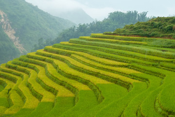 Rice fields in the Sapa mountain region, Vietnam