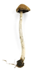 Isolated Mushroom With Stem