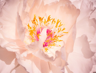 Pink flower petals, background