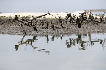 A clean shoreline with stumps of mangrove trees seen in Bodo Rivers State