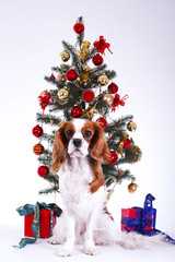 Dog with christmas tree. animal pet cute christmas photo. Studio photo with cute puppy dog near the christmas tree. Cute.