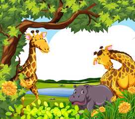 Giraffes and hippo by the pond
