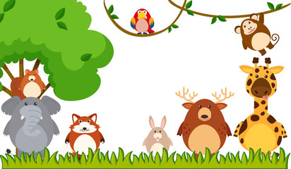 Different types of animals in the park