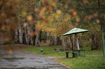 autumn park rainy autumn nature of the Far Eastern city of Russia