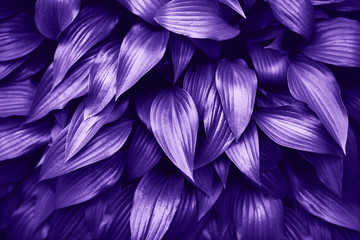 Ultra Violet background made of fresh green leaves.