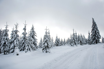 Snow covered winter road and fir trees