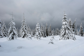 Christmas winter wonderland in the mountains with snow covered trees