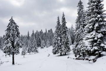 Magic winter holiday concept