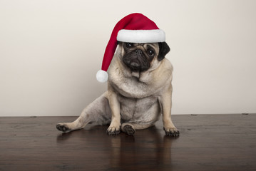 cute Christmas pug puppy dog wearing santa claus hat, sitting down on wooden floor