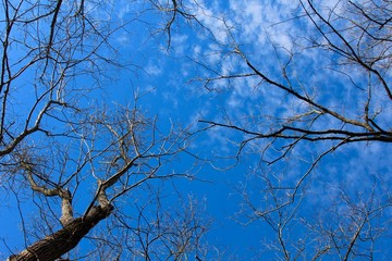 The bare tree branches with the blue sky and clouds in the background.