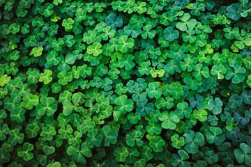 Текстура растения кислица