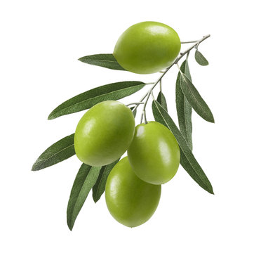 Vertical green olive branch isolated on white background