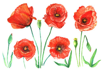 Watercolor set of red poppies.