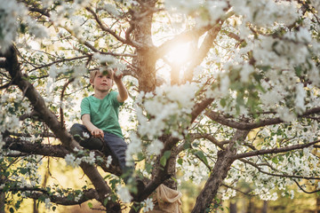 Boy climbing an apple tree