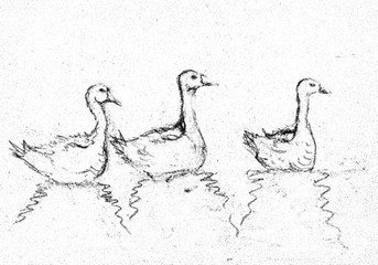 Three gooses in black and withe drawing. The dabbing technique gives a soft focus effect due to the altered surface roughness of the paper.