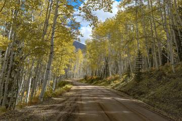 Yellow aspens along dirt road