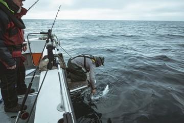 Fisherman leaving shark in sea