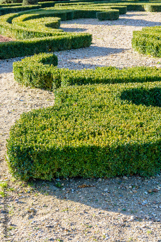 Partial view of boxwood trimmed in the shape of a fleur-de-lis in a ...