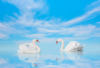 Two swans floating on the water