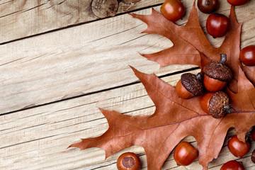 Dried acorn on oak leaf on oak leaf.Wooden background.Autumn background.Closeup.Copy space