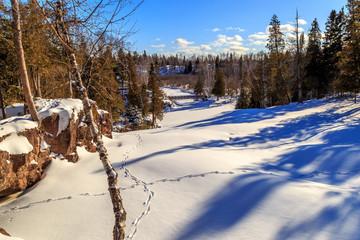 Winter Animal Tracks