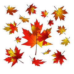 Maple leaves. Bright design. Autumn fall.