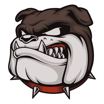 Head of Angry Bulldog