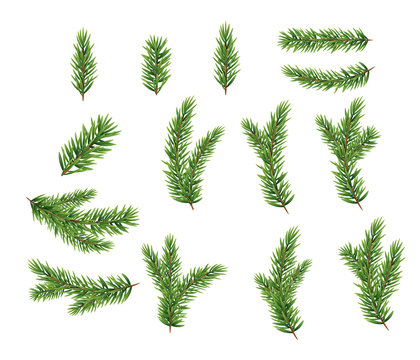 Collection Set of Realistic Fir Branches for Christmas Tree, Pine. Vector Illustration