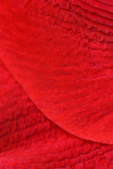 Close up of red petal