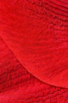 Close up of red petal